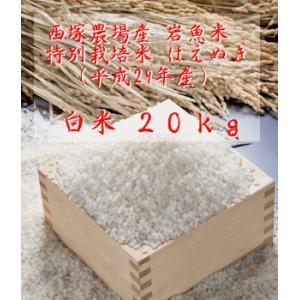 【新米】特別栽培米はえぬき岩魚米 (平成29年産)白米 20kg|nishidukafarm