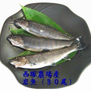 岩魚 30匹 nishidukafarm
