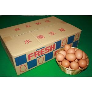 とれたて新鮮平飼い有精卵5キロ入り|nishii-organic