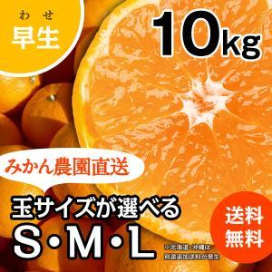 みかん -早生- 大箱(約10kg) (出荷時期:11月下旬〜1月)|nishikawafarm