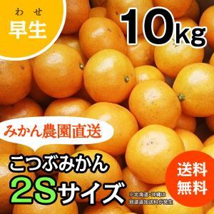 こつぶみかん -早生- 大箱(約10kg) (出荷時期:11月下旬〜1月)|nishikawafarm