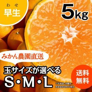 みかん -早生- 小箱(約5kg) (出荷時期:11月下旬〜1月)|nishikawafarm