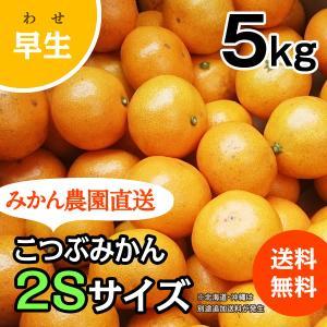 こつぶみかん -早生- 小箱(約5kg) (出荷時期:11月下旬〜1月)|nishikawafarm