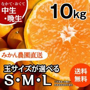 みかん -中/晩生- 大箱(約10kg) (出荷時期:12月下旬〜1月)|nishikawafarm