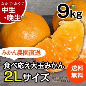 みかん -中/晩生 2L- 大箱(約9kg) (出荷時期:12月下旬〜1月)|nishikawafarm