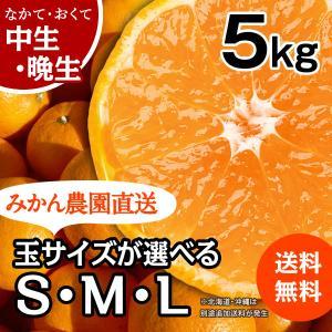みかん -中/晩生- 小箱(約5kg) (出荷時期:12月下旬〜1月)|nishikawafarm