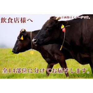 牛肉 近江牛 A5 340kg まるごと一頭販売 キャンセル不可商品 送料無料