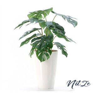 【銀と光触媒で空気をきれいに】プレミアム光触媒人工観葉植物 フェイクグリーン「モンステラ 12LVS 高さ5055cm|nitzeshop