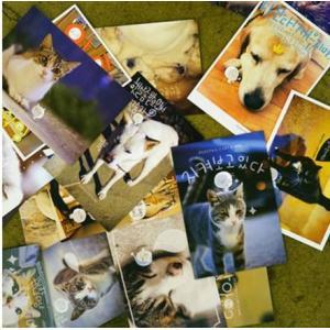 ペリーテイルの「キャット&ドッグはがきセット」(韓国語/ハングル版) MEET THE CAT AND DOG