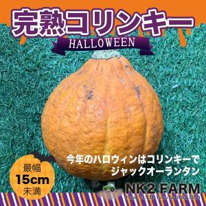 北海道産 超完熟 コリンキー かぼちゃ Mサイズ×1玉(幅最長 約14〜16cm)/今年のハロウィン...