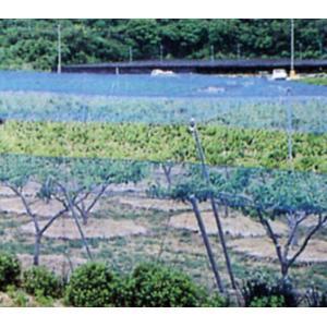防鳥ネット 強力防鳥網 1000D 3cm目×幅3.6m×長さ9m(ブルー)|nns