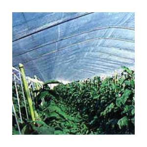 トンネル栽培用農ビ ハイホットスカイ8  長さ100m×厚さ0.1mm×幅185cm|nns