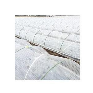 トンネル栽培用 農ビロジーナ 厚さ0.05mm 幅210cmX長さ100m|nns