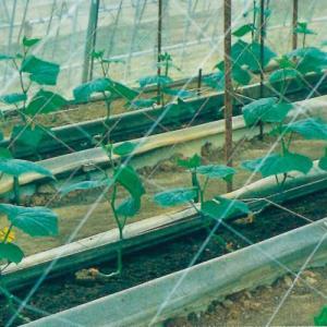 キュウリネット  白緑  24cm目×幅135cm×長さ36m|nns