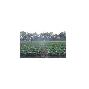 """露地でお使いいただく灌水チューブです。""""やわらかい雨""""のような散水で土の跳ね返りがなく、やさしく作物..."""