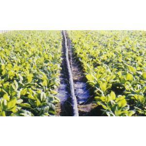 灌水 散水 潅水用 キリコ  H型 100m |nns