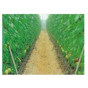 灌水 散水 潅水用 ストリームライン60-02(20cmピッチ) 250m巻|nns