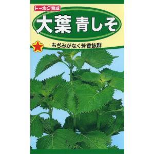 大葉青しそ 種子 たね 品番1330|nns