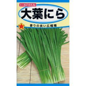 大葉にら 種子 たね 品番3076|nns