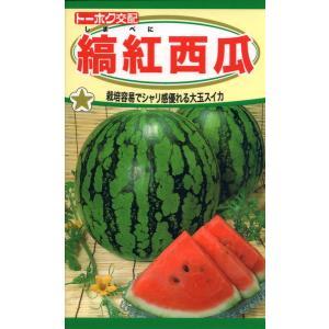 F1 縞紅西瓜 種子 たね 品番4654|nns