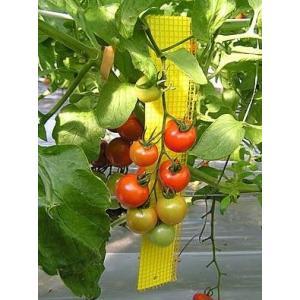 防虫 ビタットトルシー(ネット付) 25枚セット S25 黄 縦35cm×5cm|nns