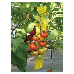 防虫 ビタットトルシー(ネット付) 25枚セット M25 黄 縦23cm×10cm|nns