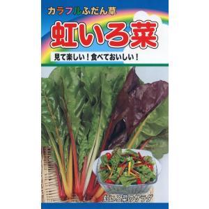 カラフルふだん草 虹いろ菜 種子 たね 品番1100|nns