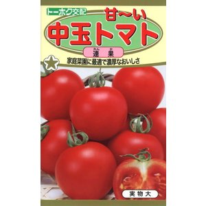 F1 甘〜い中玉トマト 連果(れんか) 種子 たね 品番3720|nns