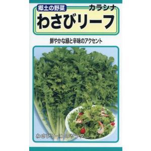 わさびリーフ 種子 たね 品番4961|nns