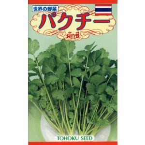 パクチー 種子 たね 品番7743|nns