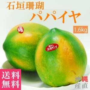 石垣珊瑚 パパイヤ 約1.6kg(約400g×4玉) 送料無料 沖縄産 果物 くだもの トロピカル フルーツ ギフト お中元 贈答用