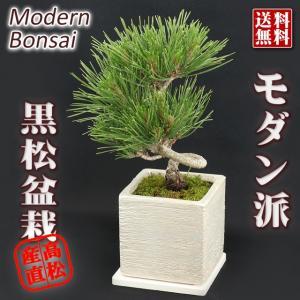 本場高松市の盆栽 和モダンのテイストで仕上げました。  送料無料  生産地:香川県
