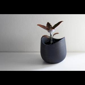 Limited Color 木工アーティスト FUQUGI フクギ CURVE プラントポット 鉢 プランター 花器 ハンドメイド 職人の器 作家物 作家の器|nontitletokyo