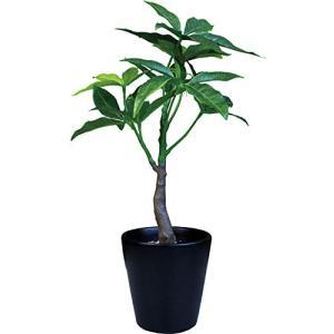 ケーアイジャパン インテリアグリーン 光触媒 造花 観葉植物 パキラ W17×D15×H25cm (ギフトボックス入り) TS|noon-store