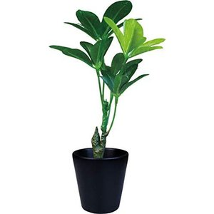 ケーアイジャパン インテリアグリーン 光触媒 造花 観葉植物 シュフレラ W14×D13×H26cm (ギフトボックス入り) TS|noon-store