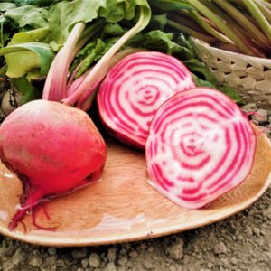 【数量限定】「北海道産無農薬栽培渦巻きビーツ『キオッジャ』2玉セット」※1玉約200g前後