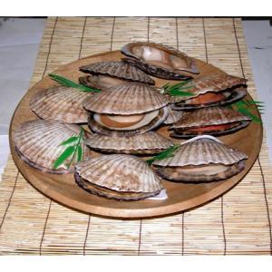 大きな貝付帆立10枚セット【ギフトにも!】北海道産【生】帆立【貝付き】10枚セット|notosuisan