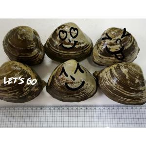 生北寄貝 殻付き/(大)/1個【67】|notosuisan