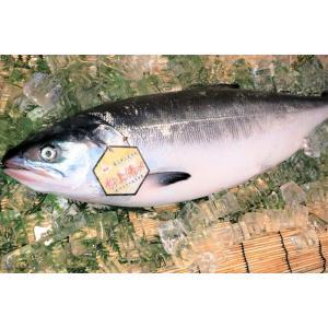 北海道産 時鮭トキシラズ 【お中元などギフト】に!身がしまって脂のり最高の若鮭!【姿切身】 1尾(3kg前後)|notosuisan
