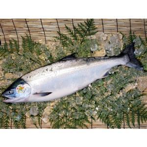 北海道産 時鮭トキシラズ 【お中元などギフト】身がしまって脂のり最高の若鮭!【姿切身】1尾(2.5kg前後)|notosuisan