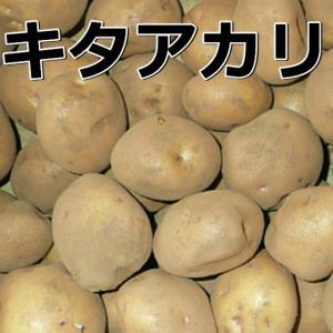 種芋 ジャガイモ キタアカリ 1kg 2月末以降の発送となり...