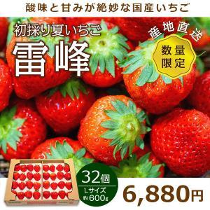 いちご 国産 夏いちご 送料無料 Lサイズ 32個 約600g 雷峰 期間限定 希少品 苺 イチゴ ...