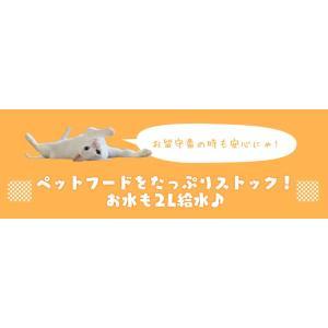 ペット用自動給餌器 ホワイト 猫用 飲み水 ペット用品 自動 給水器|nyanko|04