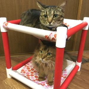 キャットタワー ハンモック 猫  ネコ ねこ  軽量 ニャンモック ベッド 多頭飼い スクエア 正方形 立方体 移動簡単 (新にゃんぱく2段モック/花円)(382)|nyanpakusengen