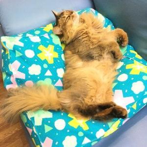 猫用ビーズクッション|nyanpakusengen|12