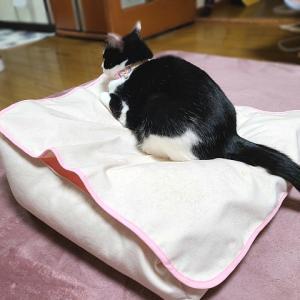 猫用ビーズクッション|nyanpakusengen|13