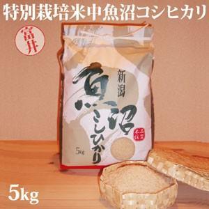 令和元年新米 極上味わい福袋 特別栽培米魚沼産コシヒカリ5kg(富井さん)