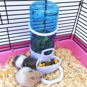 ハムスターや小鳥などの配食量を調節をすることができる自動給餌器です。給水器 としてもご利用できます。...