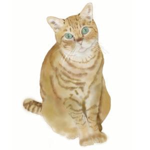 絵画 モダン アートパネル アート インテリア 雑貨 おしゃれ ロココロ 猫 ネコ ねこ 動物 アニマル 画家 : rune 作品 : おすまし|obeolysco