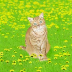 絵画 モダン アートパネル アート インテリア 雑貨 おしゃれ ロココロ 猫 ネコ ねこ 動物 アニマル 画家 : rune 作品 : たんぽぽと猫|obeolysco